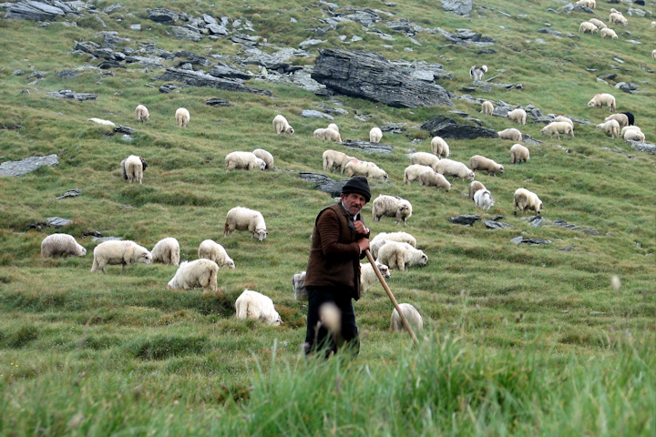 Psalm 23 Musings: The Lord is My Shepherd – Hope for the